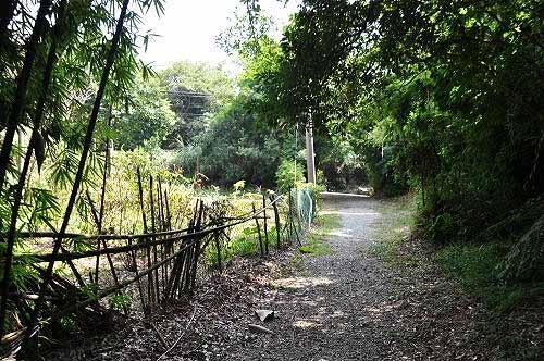 取右行,前方几十公尺处,即为猴崁产业道路。 (图片提供:tony)