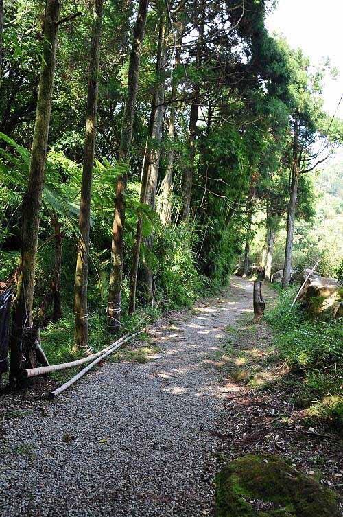 往竹子湖方向的农路。 (图片提供:tony)