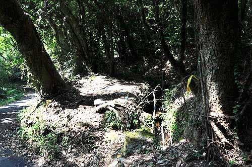 猴崁古道入口(猴崁产业道路1K附近的岔路内)。(图片提供:tony)