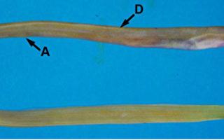 組圖:臺灣鰻魚高達207種 多樣性全球第一