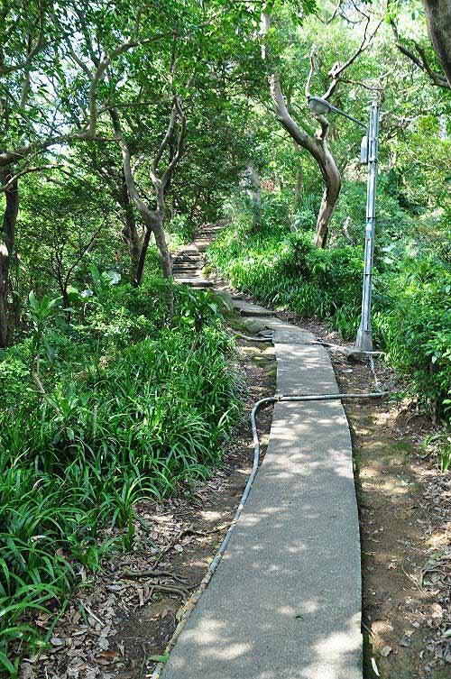 棱线水泥步道,爬向国旗岭,沿途起伏平缓。 (图片提供:tony)