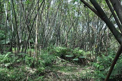 穿越一片竹林后,抵达乡林农场。 (图片提供:tony)