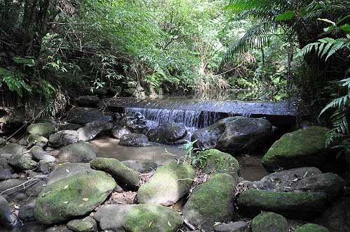 越过溪岸拦砂坝至对岸。 (图片提供:tony)