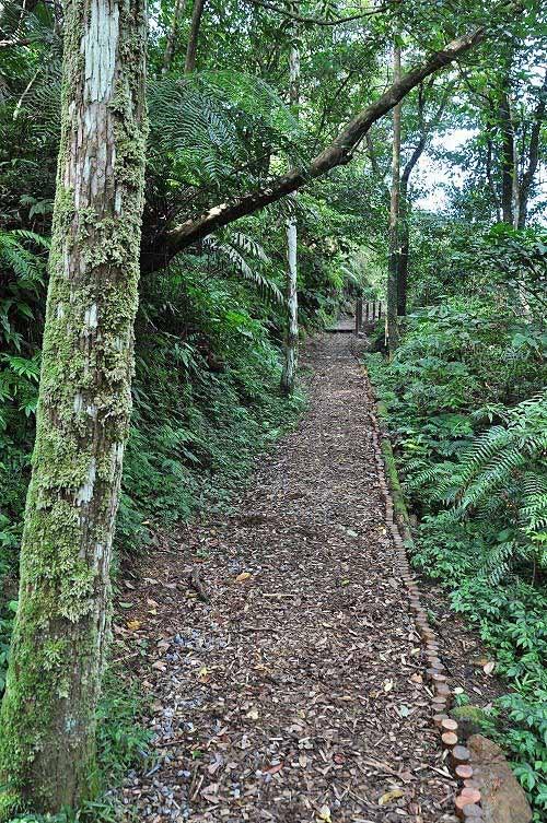 望古赏瀑步道沿途林荫怡人,平缓好走。 (图片提供:tony)