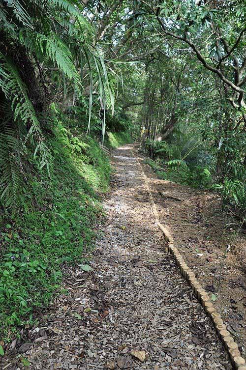上爬约百阶,转为平缓的碎石子木屑步道。前方有左岔路。(图片提供:tony)
