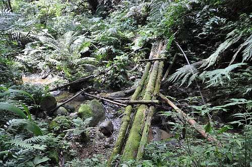 乡林农场亲水步道。(图片提供:tony)