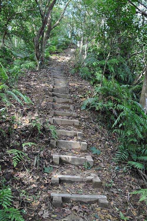 循着棱线山径而行,上坡路段有木板土阶。 (图片提供:tony)