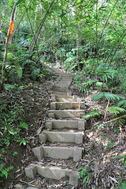 脚寮山登山步道,新整修的木板土阶。 (图片提供:tony)