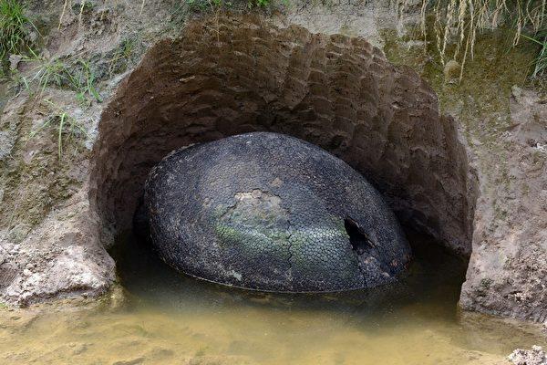 阿根廷发现神秘大甲壳 疑为史前巨兽化石