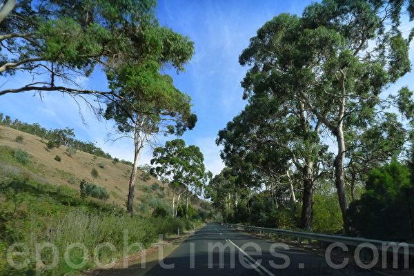 通往菲爾德山的A10-Lyell Hwy公路。(華苜/大紀元)