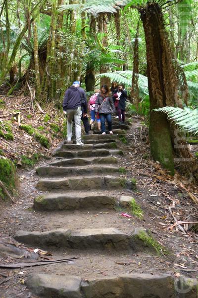 鬱鬱蔥蔥的山林美景,人們穿行於密林之中,漫步在天然氧氣之中。(華苜/大紀元)