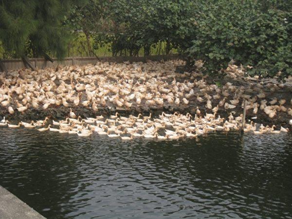发现禽类异常应立即通报。(新竹市府提供)