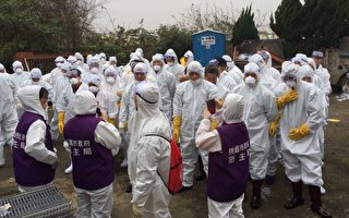1蛋鴨場感染新型H5亞型高病原性禽流感,15日16時完成清場消毒。(桃園動保處/提供)
