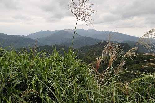 内平林山展望良好,远眺东北角群山。(图片提供:tony)