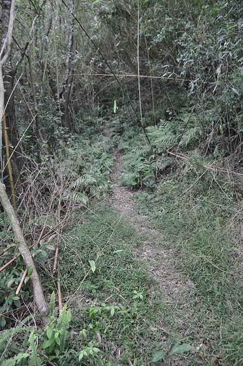 西步道为泥土山径。 (图片提供:tony)
