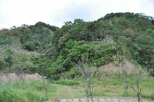 直行往西步道,顺访附近的内平林山。 (图片提供:tony)