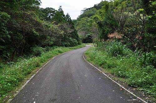 平湖森林游乐区环山道路(昔日的番仔坑古道)。(图片提供:tony)