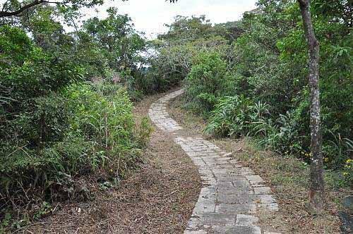 平湖森林游乐区东步道,平坦好走。(图片提供:tony)