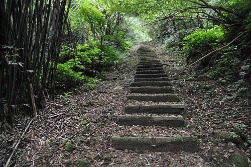 平湖森林游乐区东一支步道。(图片提供:tony)