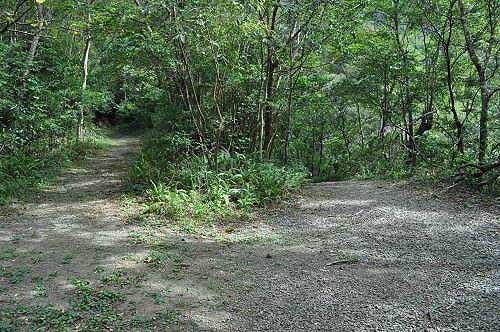 心灵谷岔路,直行往柑橘园,右往心灵谷。 (图片提供:tony)
