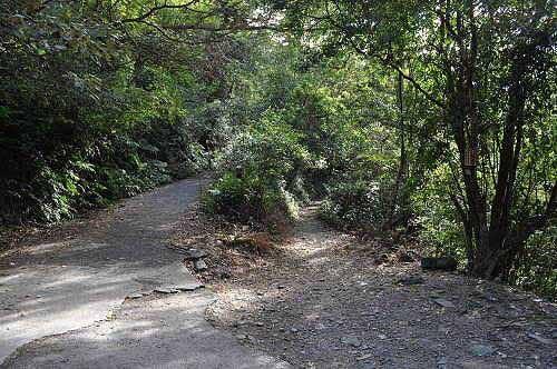 云森瀑布登山口(右岔路)。 (图片提供:tony)