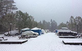武陵農場降雪,露營區的民眾24日一覺醒來,大地已被白雪覆蓋。(王琰提供)