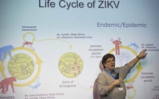 世界衛生組織(WHO)美洲區域辦事處近日發出聲明表示,美洲地區除了加拿大及智利外,都將淪為茲卡病毒擴散的區域。圖為巴西聖保羅大學生物醫學科學研究所實驗室研究員Paolo Zanotto今年1月8日在記者會解說茲卡病毒的生命週期。(NELSON ALMEIDA/AFP/Getty Images)