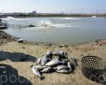 高雄市政府表示,27日各區公所回報漁業損失約7億9千萬元左右,受損金額已超越台南,成為全台受損最嚴重的地區。(李怡欣/大紀元)