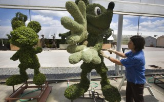 An employee adjusts a topiary in the backstage greenhouse area of Disney World in Orlando, Florida, April 10, 2008. The complex is reportedly the most visited and largest recreational resort in the world, containing four theme parks, two water parks, twenty-three themed hotels, and numerous shopping, dining, entertainment and recreation venues. Disney World opened on October 1, 1971.         AFP PHOTO/Jim WATSON (Photo credit should read JIM WATSON/AFP/Getty Images)