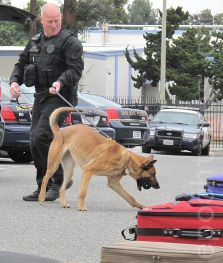 警犬队在做检查行李训练。(李文净/大纪元)
