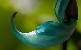 组图:Syl Lebar 花卉摄影(24)