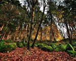 俄勒冈州波特兰(Portland)秋景(Pixabay)
