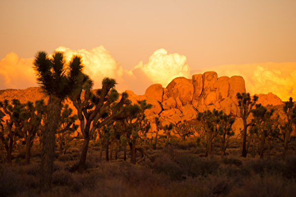 日落时分的约书亚树国家公园。(戴兵/大纪元)
