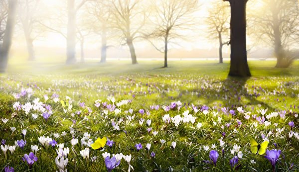 陽光明媚的春天是單身尋找戀人的好時候。(fotolia)