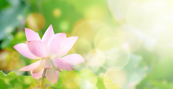 十丈蓮花的傳說──貞孝節烈的清朝吳貞女
