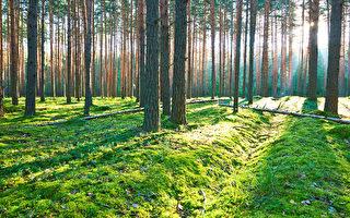 每天都有無數的人,沐浴著晨曦,踩著和太陽一樣的步伐,以身上僅有的餘熱陪伴每天升起的太陽。(fotolia)