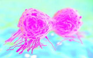 英國劍橋大學的研究發現,不殺死腫瘤四周的健康細胞,可阻止腫瘤擴大,避免病情惡化。圖為一種癌細胞。(Fotolia)