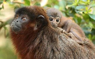雲南動物園  有猴子接生婆