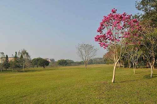 暨南大学校园美景(4) (图片提供:tony)