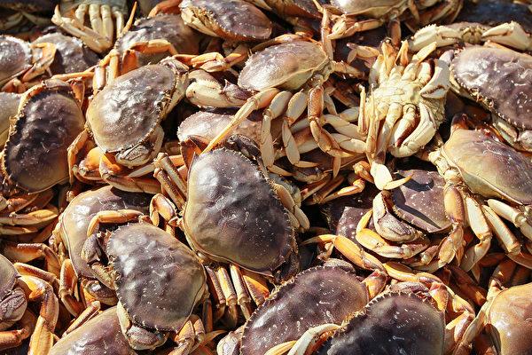 旧金山渔人码头的珍宝蟹目前仍然只能是从外州运来的。(Justin Sullivan/Getty Images)