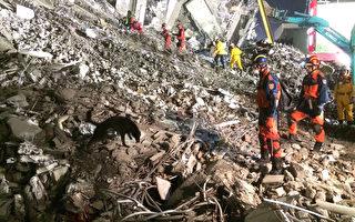新北市府消防局12日持续在台南支援搜救,派出多只资深搜救犬出动救灾。搜救犬(图)尽责地在废墟中,嗅出任何气息,协助救难人员定位。(新北市政府消防局提供)