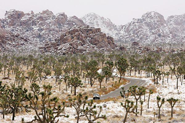 雪天的约书亚树国家公园。(David McNew/Getty Images)
