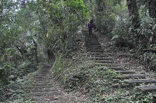 云仙乐园赏蕨步道。  (图片提供:tony)