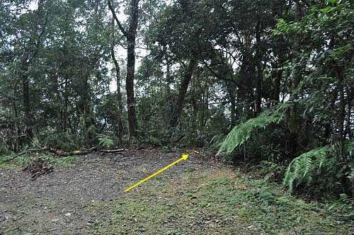 山径往云仙乐园,约位于林道7.45K处。 (图片提供:tony)