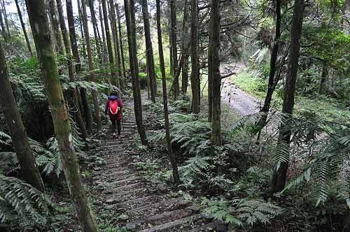 取左行,下行约3~4分钟,抵达内洞林道。 (图片提供:tony)