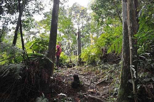抵达步道高处岔路口,右往大刀山,左往内洞林道。  (图片提供:tony)