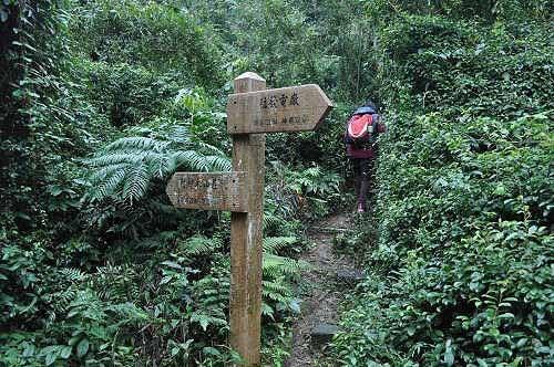 即抵达岔路口,左行往神木山庄,岔路往啦卡登山步道无指标 (图片提供:tony)