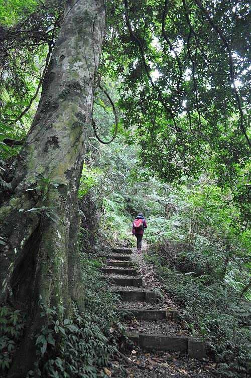 山径缓缓上爬。 (图片提供:tony)