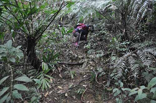 山径陡下通往云仙乐园(图片提供:tony)