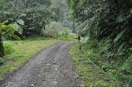 内洞林道(图片提供:tony)